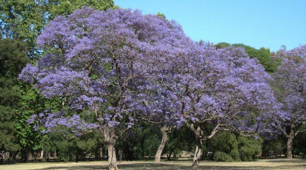 Argentina in November
