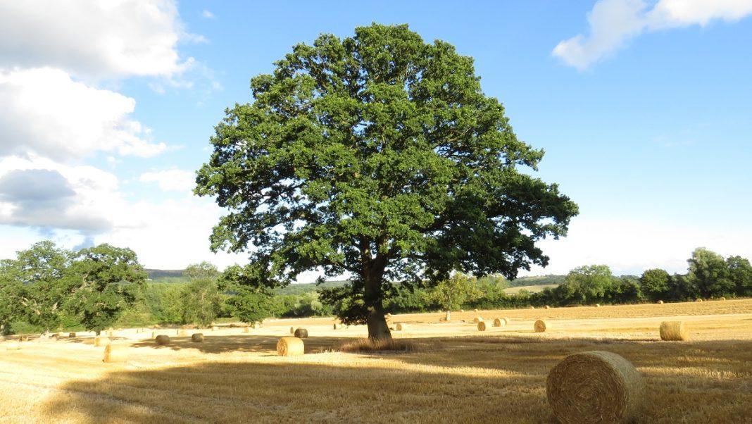 Walking through the English Countryside